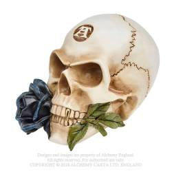 Black Rose Alchemist Skull