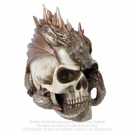 Dragon Keeper's Skull